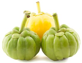 what is garcinia cambogia fruit