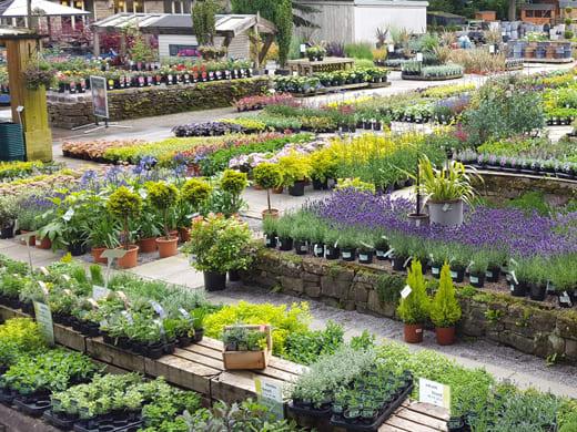 Wyevale Garden Centres