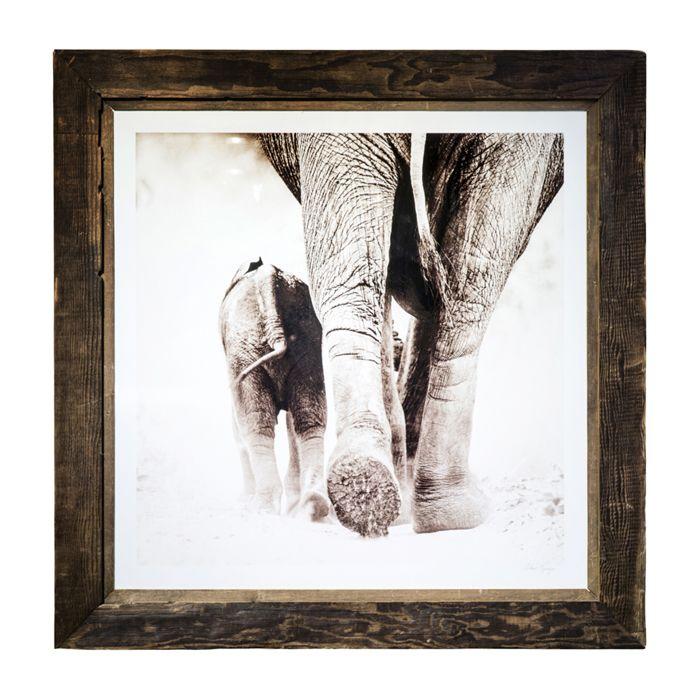 Graham Springer Wall Art For Sale Weylandts South Africa