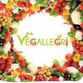 vegallegri avatar