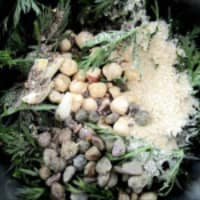 Pesto de hojas de zanahoria y nueces con el aroma del cardamomo paso 4