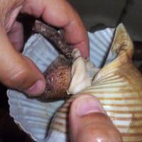 Lumache di mare step 2