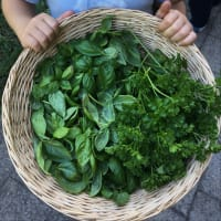Pesto Verde congelarse paso 1