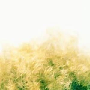 avatar pasquiescarola