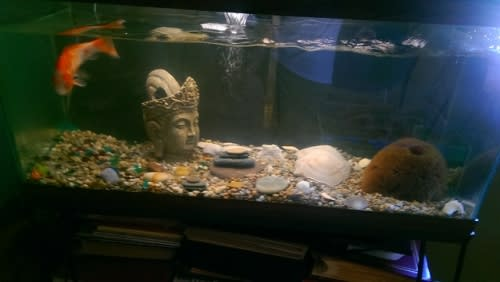 goldfish koi house