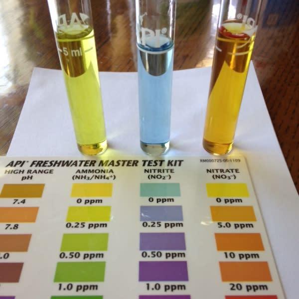 testing water parameters