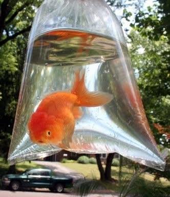 New goldfish