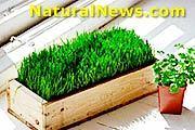 Wheatgrass and Parsley