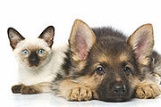 Kitten and Pup