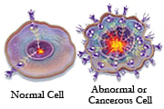 Normal vs Cancerous Cell