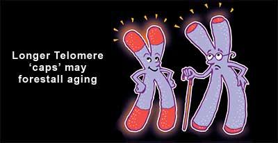 Longer telomeres may forestall aging