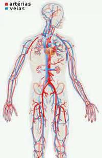 arterias corpo humano