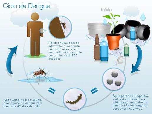 Ciclo da Dengue