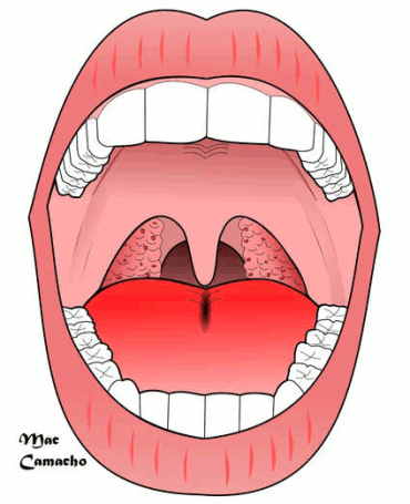 esquema de boca e garganta