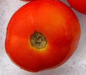 Olho de tomate e verrugas
