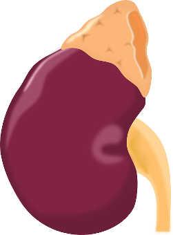 rim e a cólica renal
