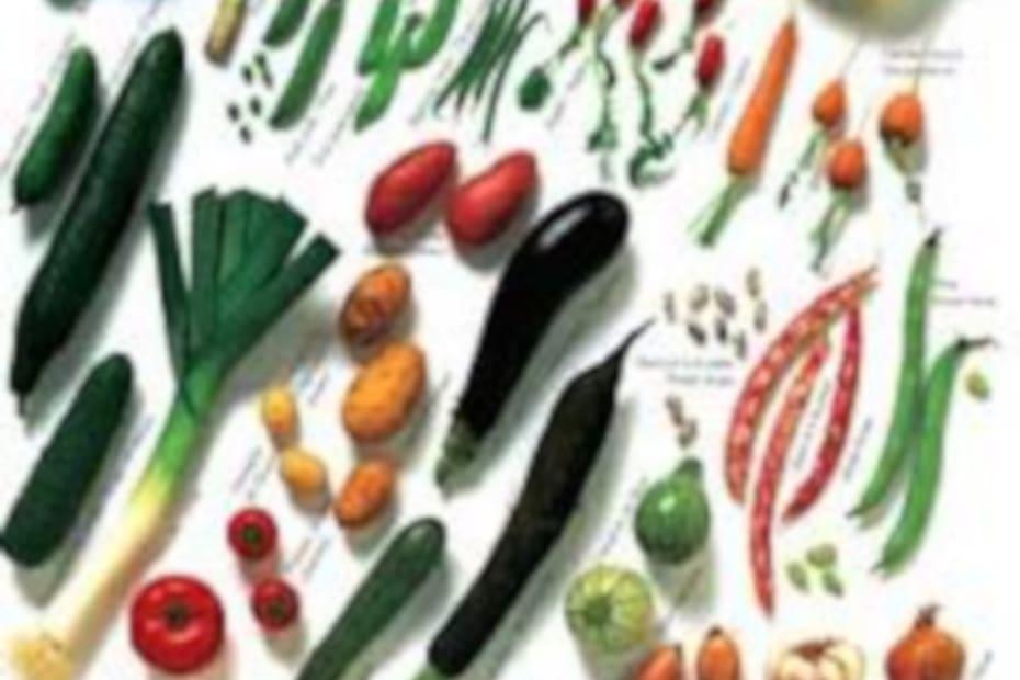 4. Nunca desista dos legumes - destacada