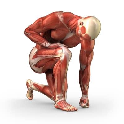 Muskel Faszien Gewebe