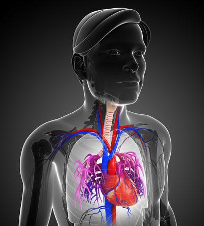 Magnesiummangel beheben Magnesiummangel Ursachen und Symptome