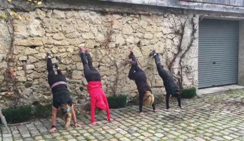 Die Handstand-Gang