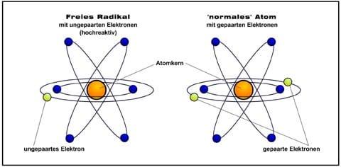 Freie Radikale - Antioxidantien