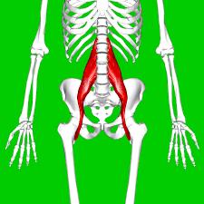 Iliopspas Rückenschmerzen