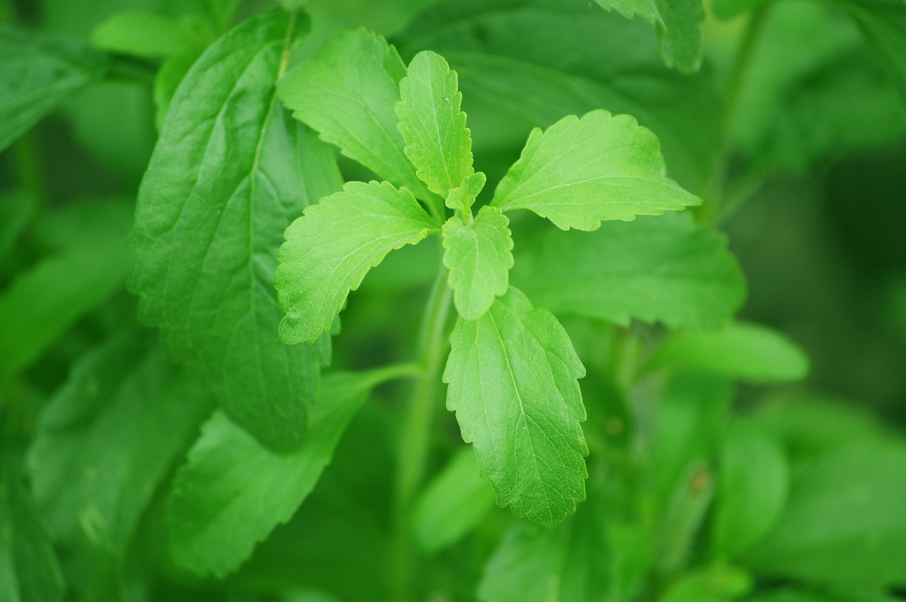 Stevia - süchtig nach Zucker - Süßstoffe