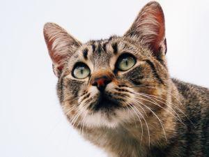 Kitty focus high