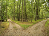 What is the proper path a person should take?