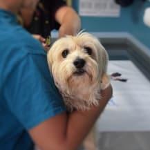 Chien remboursement veterinaire