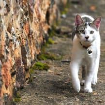 Identification obligatoire des chats