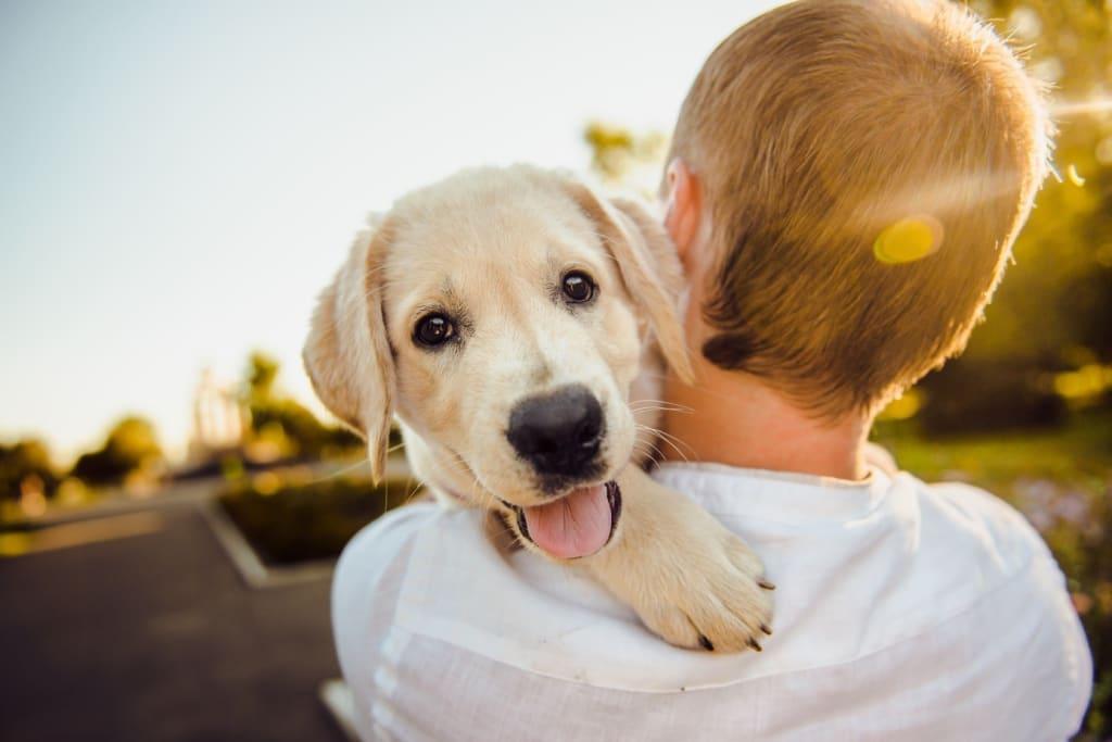 Labrador maître - Tourisme avec mon chien - Animaux - 1386x925 - JPG