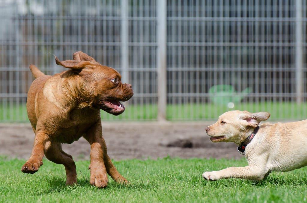 Pension pour chien - chiots qui jouent - Animaux - 1280x847 - JPG