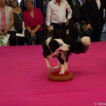 chien animal expo