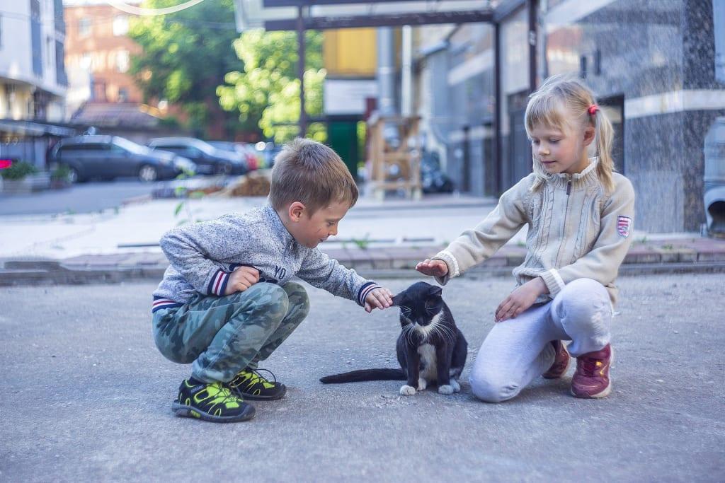 Identification obligatoire des chats - enfants ville chat garçon fille - Animaux - 1920x1280 - JPG