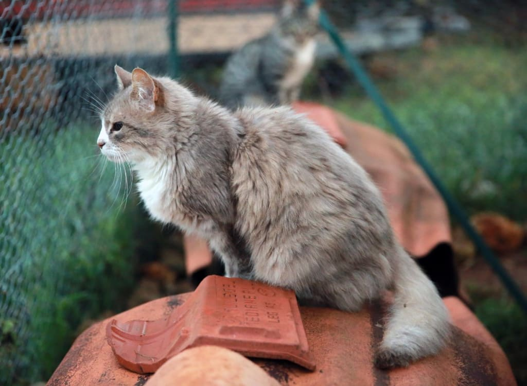 Pension pour chat - chat gris grillages - Animaux - 1229x900 - JPG