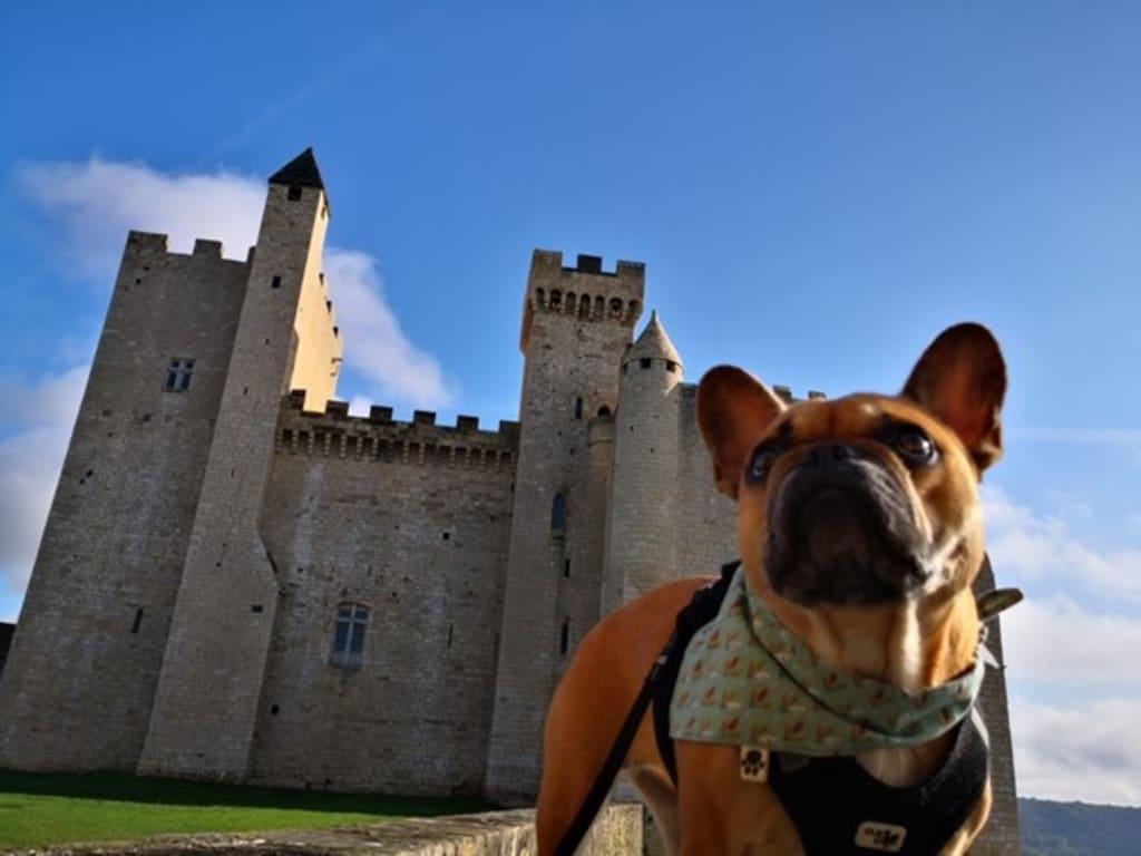 Bouledogue chateau - Tourisme avec mon chien - Animaux - 605x454 - JPG