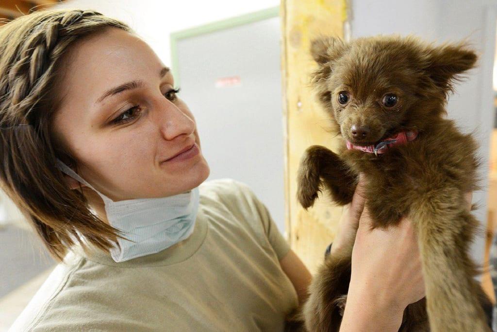 Remboursement frais veterinaires - chiot vétérinaire - Animaux - 960x640 - JPG