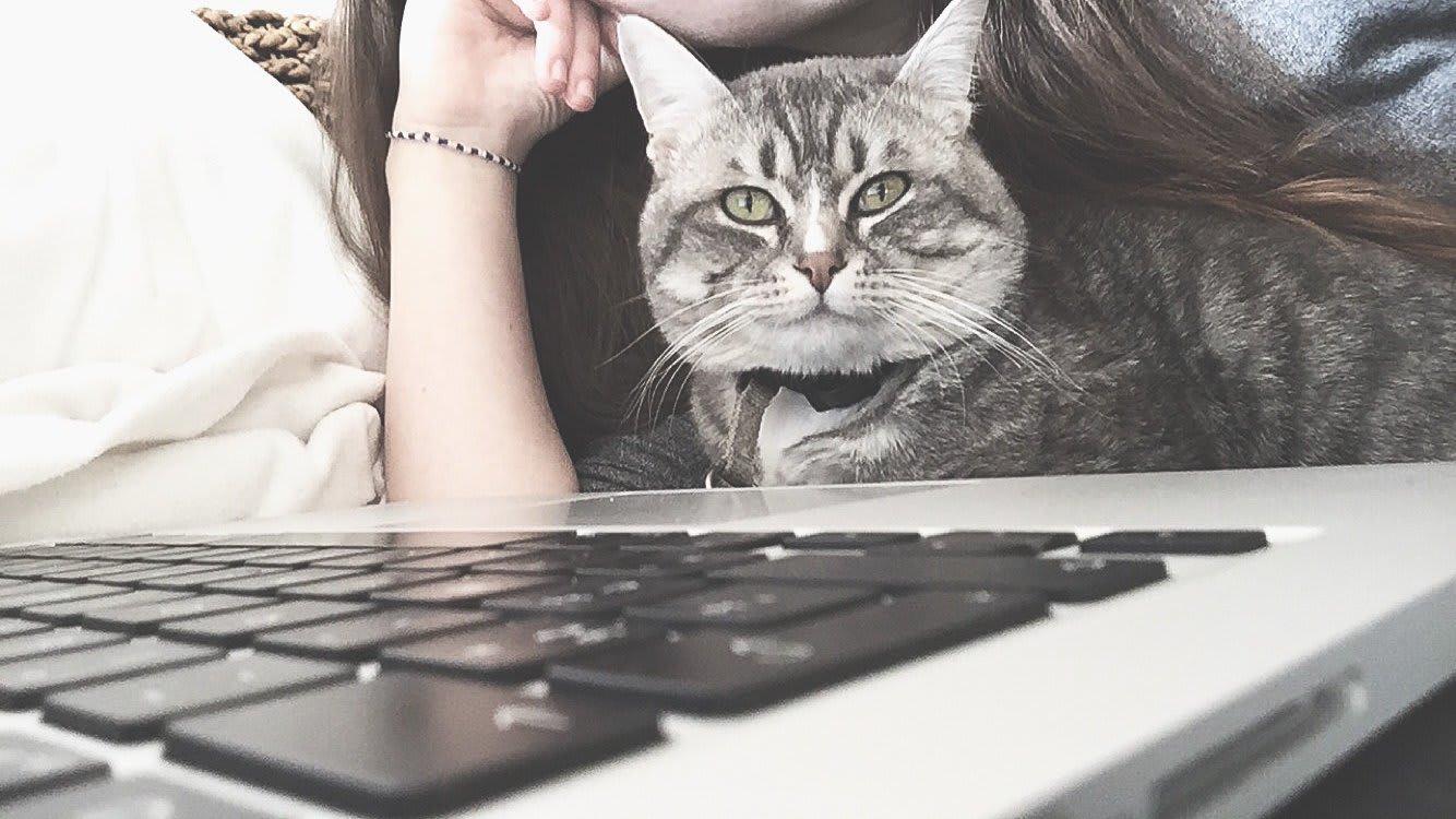 Assurance animale - Chat ordinateur - Animaux - 1334x750 - JPG