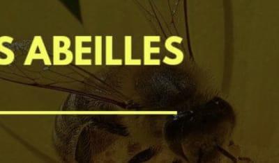 La disparition des abeilles en 10 chiffres