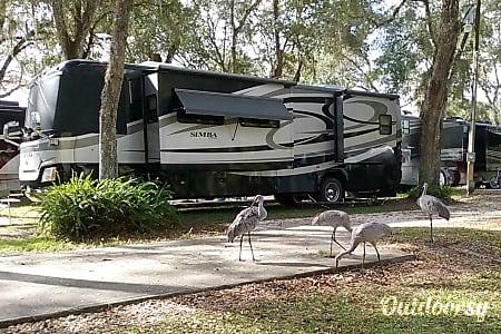 Simba  Wildwood, FL
