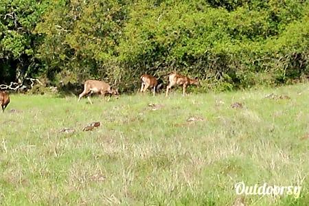 02008 Forest River Sierra  Sebastopol, CA