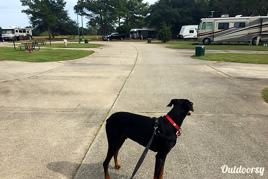 2013 Airstream International New Orleans, Louisiana Camping with the family pet can be fun...