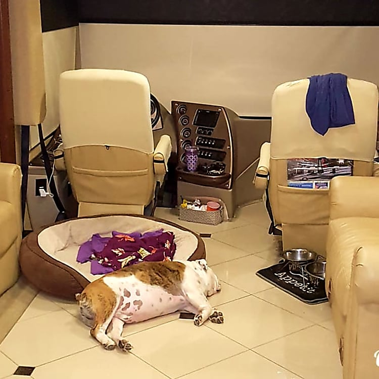 This is my English Bulldog named 'Sarge' taking a nap on the cool floor.  Sarge has traveled all over the country with us.