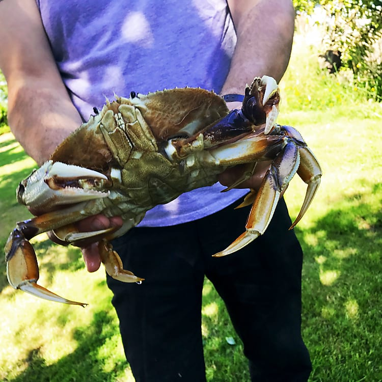 Ready for some Oregon Crab?
