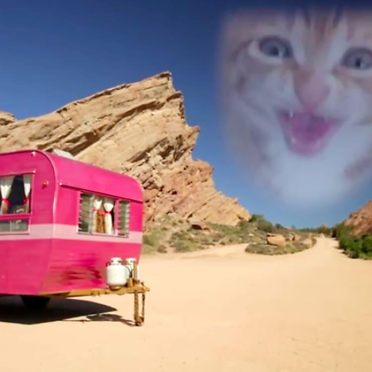 Kitten rescue video
