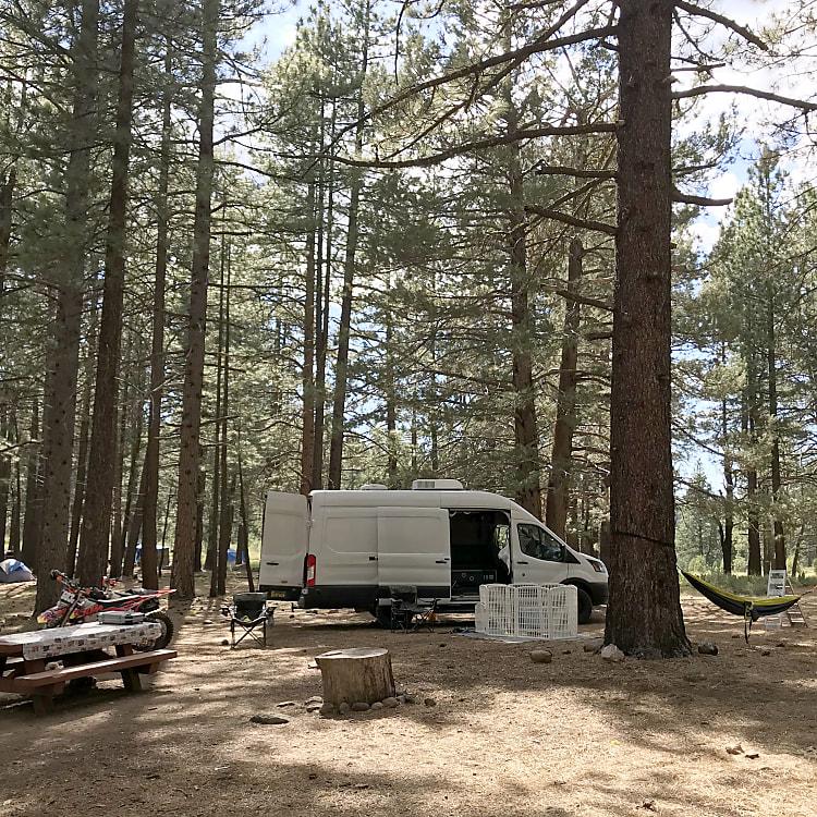 Hiding among the trees at Lake Tahoe, CA
