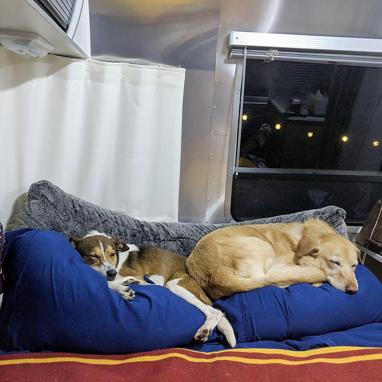 The Airstream is dog friendly. Here are our two pups enjoying the bed after a long day of adventures!