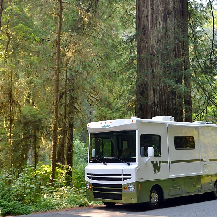 To the Majestic Redwoods...