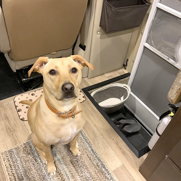 Laney wants to welcome your furry friend to join your family on your next adventure! (but no cats due to severe owner allergy)